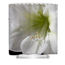 White Amaryllis Shower Curtain by Adam Romanowicz