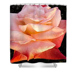 White And Peach Shower Curtain by Zina Stromberg