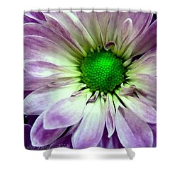 White And Purple Daisy Shower Curtain by Danielle  Parent