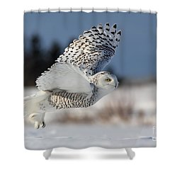 White Angel - Snowy Owl In Flight Shower Curtain by Mircea Costina Photography