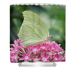 Shower Curtain featuring the photograph White Angled Sulphur by Judy Whitton