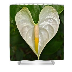 White Anthurium Heart Shower Curtain by Venetia Featherstone-Witty