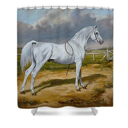White Arabian Stallion Shower Curtain