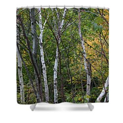 Shower Curtain featuring the photograph White Birches In The Woods by Denyse Duhaime