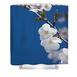 White Blossom Shower Curtain by Anne Gilbert