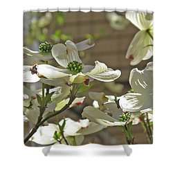 White Blossoms Shower Curtain by Barbara McDevitt