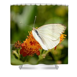 Shower Curtain featuring the photograph White Butterfly On Mexican Flame by Debra Martz