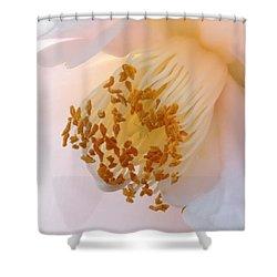 White Camellia Closeup Shower Curtain by Carol Groenen