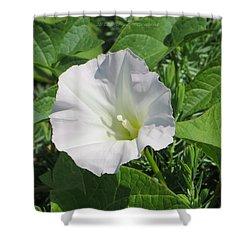 White Candour Shower Curtain by Sonali Gangane