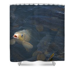 White Carp In The Lake Shower Curtain by Chris Flees