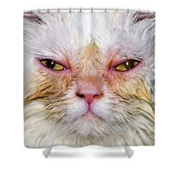 Scary White Cat Shower Curtain