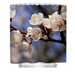 White Cherry Blossoms Shower Curtain by Mary Lee Dereske