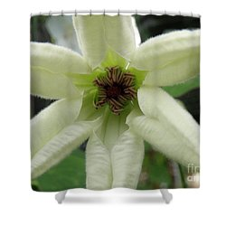White Clematis Shower Curtain by Lainie Wrightson