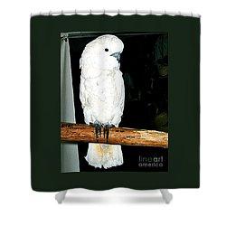 White Cockatiel-loreto Mx. Shower Curtain by Jay Milo