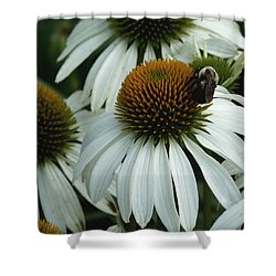 White Coneflowers  Shower Curtain