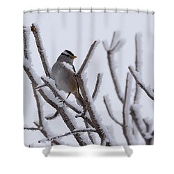 White Crowned Sparrow Shower Curtain by Ernie Echols