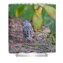 White-crowned Sparrow Shower Curtain by James Petersen