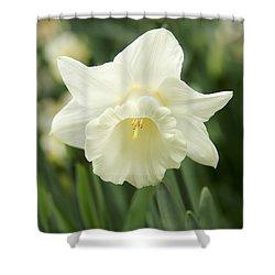 White Daffodil Flower Shower Curtain by Jennie Marie Schell
