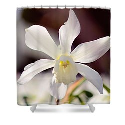 White Daffodil Shower Curtain by Tommytechno Sweden