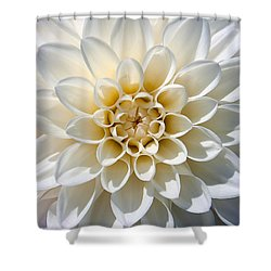White Dahlia Shower Curtain by Carsten Reisinger