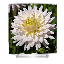 White Dahlia Flower Shower Curtain