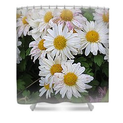 White Daisies Shower Curtain by Kay Novy