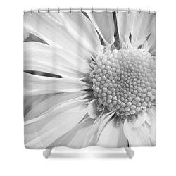 White Daisy Shower Curtain by Adam Romanowicz
