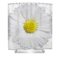 White Daisy On White Shower Curtain by Jon Neidert