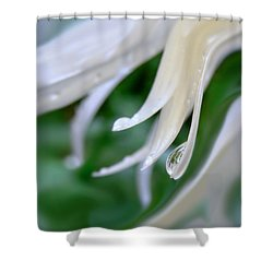 White Daisy Petals Raindrops Shower Curtain by Jennie Marie Schell