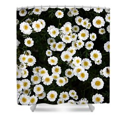 Shower Curtain featuring the photograph White Daisys by Jean Walker