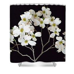 Shower Curtain featuring the photograph White Dogwood Branch by Jeannie Rhode