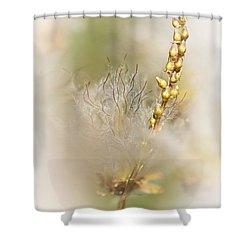 White Dryas  Shower Curtain by Heiko Koehrer-Wagner