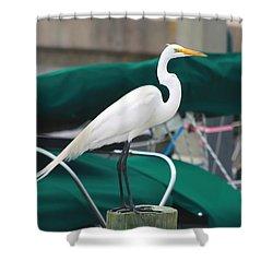 White Egret Shower Curtain by Debra Forand