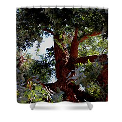 White Eucalyptus 2 Shower Curtain