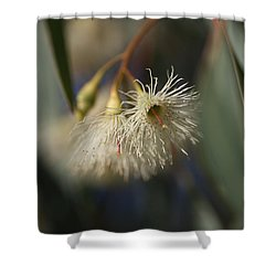 White Eucalyptus  Shower Curtain by Joy Watson