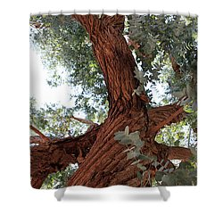 White Eucalyptus Tree Shower Curtain
