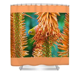 White-eye On Deer-horn Shower Curtain by Michele Penner