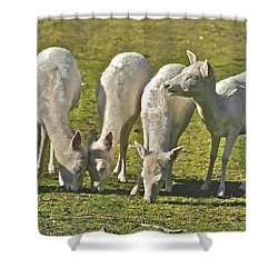 White Fallow Deer Mt Madonna County Park Shower Curtain