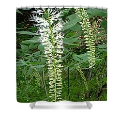 White Fern Shower Curtain by Aimee L Maher Photography and Art Visit ALMGallerydotcom