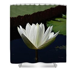 Shower Curtain featuring the photograph White Flower Growing Out Of Lily Pond by Jennifer Ancker