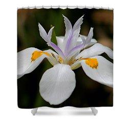 White Flower Shower Curtain by Pamela Walton