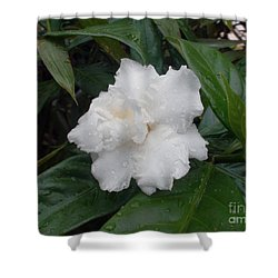 White Flower Shower Curtain by Sergey Lukashin