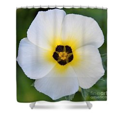 White Flower- Spotlight Shower Curtain