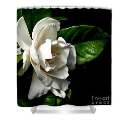 Shower Curtain featuring the photograph White Gardenia by Rose Santuci-Sofranko