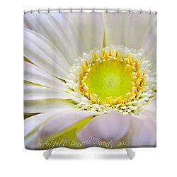 White Gerber Daisy Macro Shower Curtain by Danielle  Parent