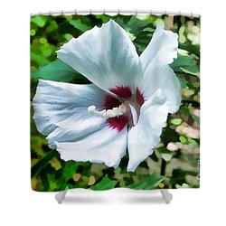 White Hibiscus From Missouri Botanical Gardens Shower Curtain by Luther   Fine Art