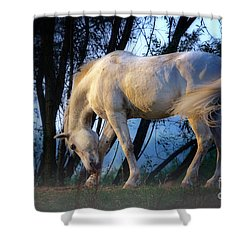 White Horse In The Early Evening Mist Shower Curtain by Nick  Biemans
