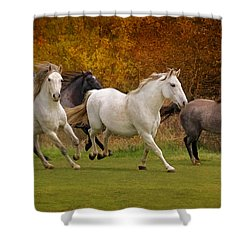White Horse Vale Lipizzans Shower Curtain