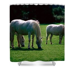White Horses, Ireland Shower Curtain by The Irish Image Collection