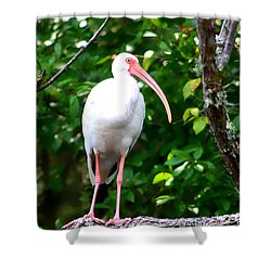 Shower Curtain featuring the photograph White Ibis by Debra Forand